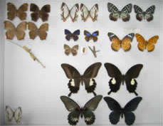 Butterflies Expanding their Habitation Area to the North