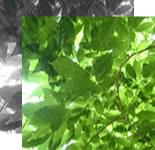 木のイメージ図