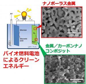 クリーンエネルギーを提供するバイオ燃料電池に向けたナノ金属電極の開発